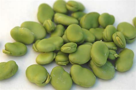 marinated fava beans recipe dishmaps