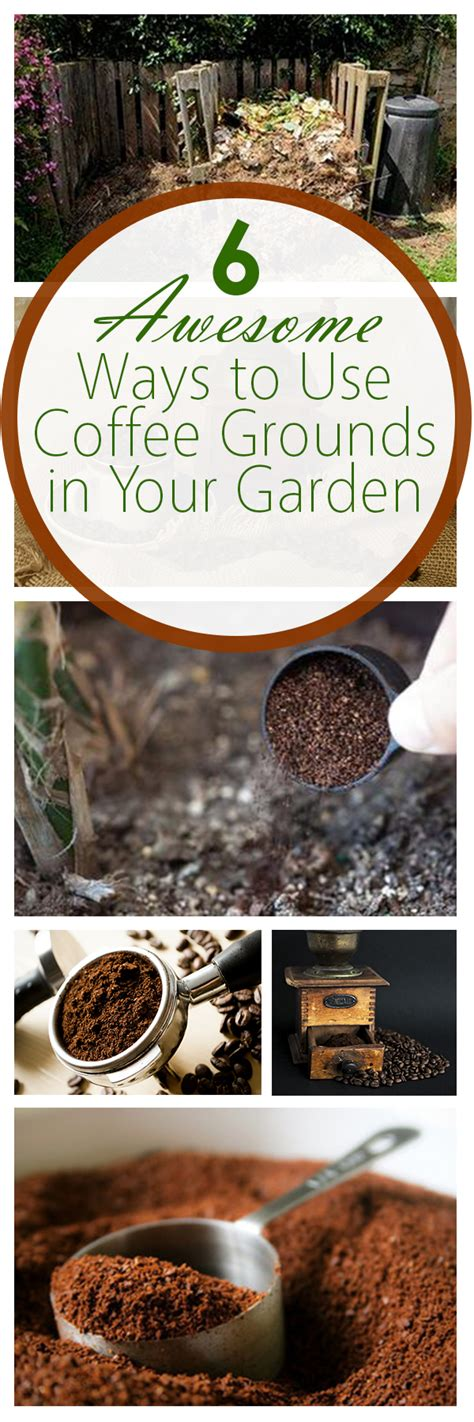 Are Coffee Grounds For Your Garden by 6 Awesome Ways To Use Coffee Grounds In Your Garden Bees