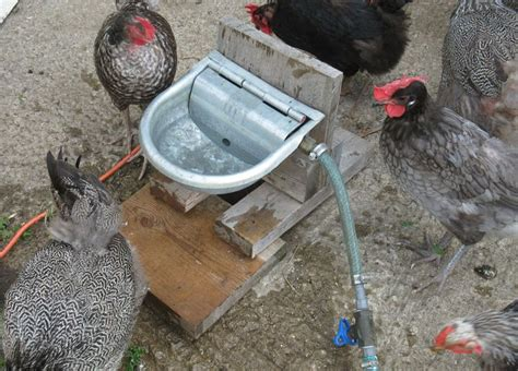 money with chickens how to make up to 12k a year with just 15 chickens books save your back and your money make an automatic waterer