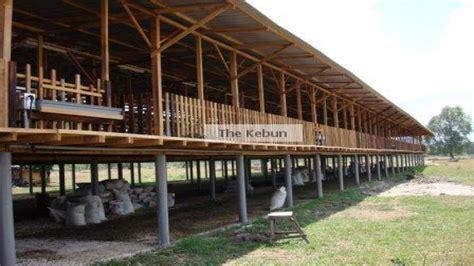 goat house plans easy goat house raised houses plans