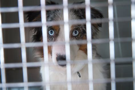 puppy stores nj new jersey senate to pet stores you may sell only rescue animals simplemost