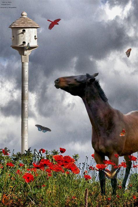 can you hear the birds sing by arielkj on deviantart