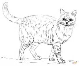 Realistic Cat Coloring Page  Free Printable Pages sketch template