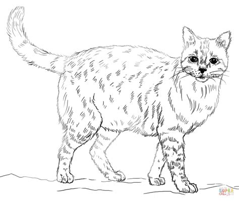 tabby cat coloring pages realistic coloring pages