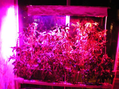 hydroponic led grow lights building your own high power led grow lights for