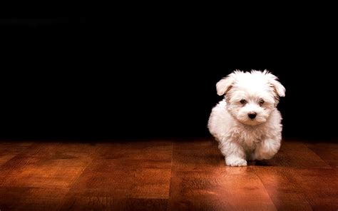 dogs wallpapers hd pictures  hd wallpaper pictures