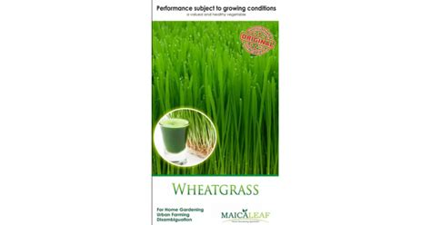 Jual Bibit Four Leaf Clover jual bibit wheatgrass