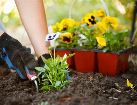 Planting A Flower Garden Planting 101 Understanding The Basics Of Growing A Garden Buildipedia