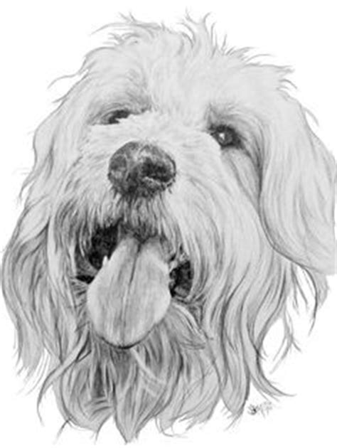 how to draw a goldendoodle labradoodle drawings goldendoodle drawing by barbara