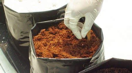 Penetralisir Udara apa itu coco peat produk penyerap bau dan lembab untuk