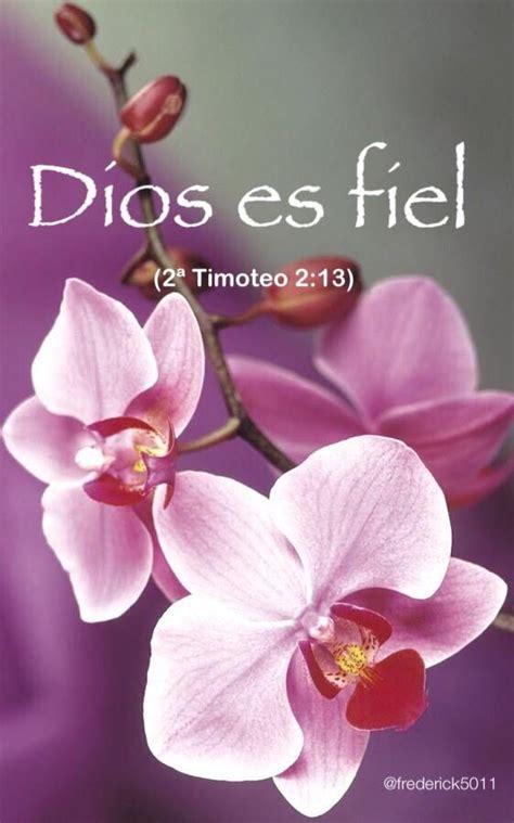 imagenes de rosas con frases cristianas imagenes de flores con frases cristianas para descargar gratis