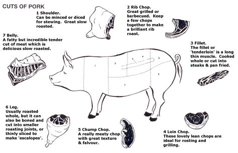 how to butcher a pig diagram diagram of cuts of pork photo courtesy of http