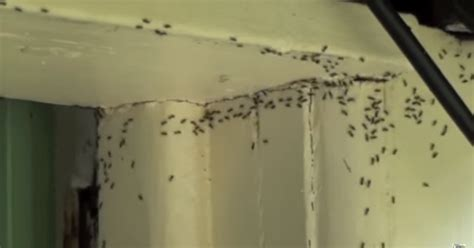 little black ants in bathroom do you have an ant problem here s how to get rid of them
