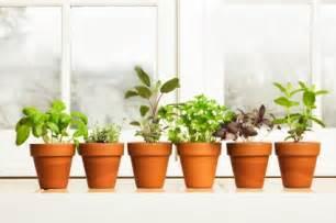 Herbs gardening tips garden guides