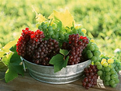 6 fruits in fruits wallpapers album 6 funjunktion