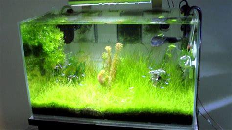 Lu Aquascape 60 Cm mr aqua aquascape tank 60 cm 2 ft or low iron