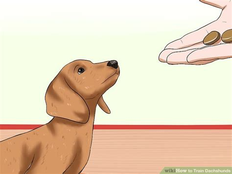 how can puppies hold their bladder how to dachshunds with pictures wikihow