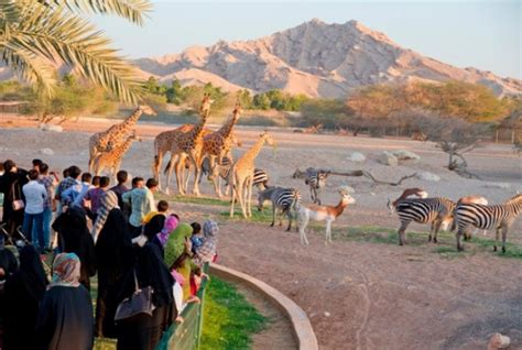 emirates zoo timing top 10 tourist attractions in the uae traveltourxp com