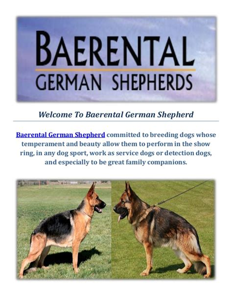 german shepherd puppies for sale in ma baerental german shepherd puppies for sale in massachusetts