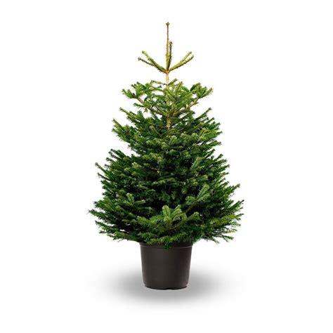 4ft christmas trees