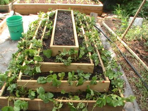 Tiered Strawberry Planter Plans by Backyard Aquaponics View Topic Best Setup For Vertical