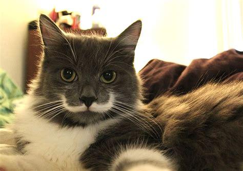 imagenes hipster gatos estos gatos son los reyes de instagram 161 mir 225