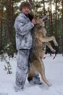 400 wolves lay siege village ruthless killers lost fear humans