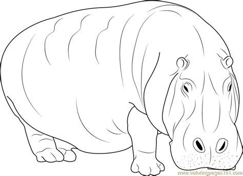 hippo coloring pages online adult hippopotamus coloring page free hippopotamus