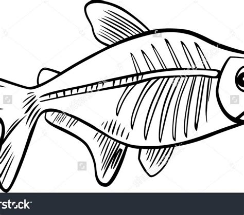 X Ray Fish Coloring Book Alphabet Stock Vector X Ray X Fish Coloring Page