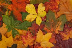 Colorful autumn leaves free stock photo public domain pictures