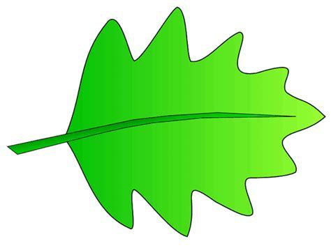leaf clip art pictures clipart panda free clipart images