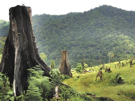 imagenes de peñas blancas nicaragua deforestaci 243 n en la reserva de la biosfera bosawas