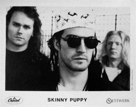 puppy assimilate lyrics 31 best images about puppy on parks addiction and image search