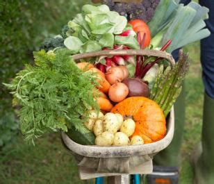 cucinare bio speciale bio la cucina biologica tante ricette bio