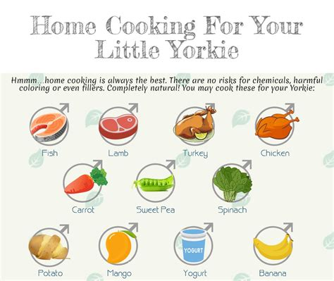 best food for yorkies best food for yorkies really right for your fur baby