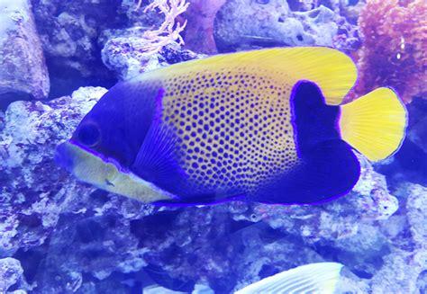 Pakan Untuk Ikan Hias Air Laut akuarium laut hati hati beri pakan bebeja