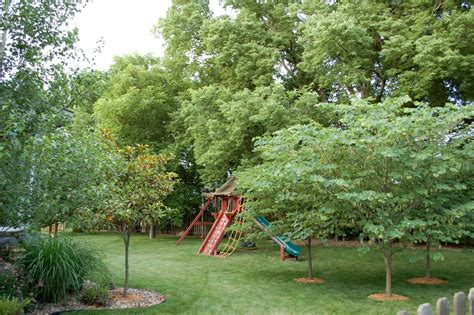 Privacy Trees For Backyard by Triyae Backyard Trees For Privacy Various Design