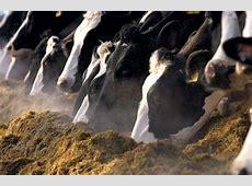 winterkost – Kaasboerderij Van Zeeburg Google Translate