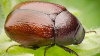 5 things you need to know about june bugs prince edward