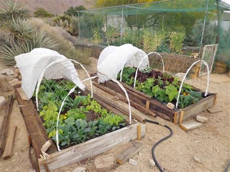 vegetable garden row covers row covers can protect your crops all year lawneq