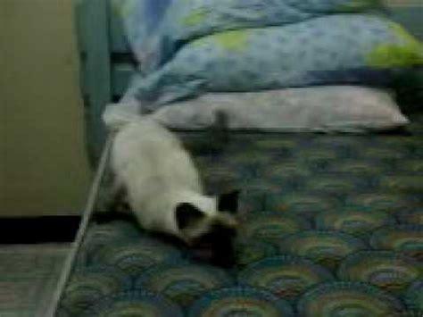 shaking drag racing cat