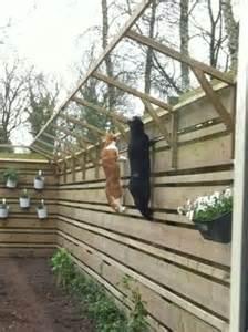 Indoor Window Garden Box - consejos zaragatos gatos en adopci 243 n zaragoza