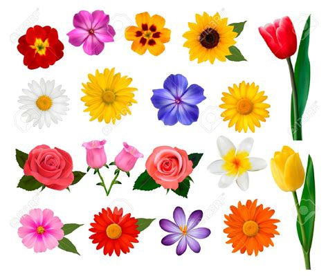 colorful flower crossword colorful flowers coloring pages