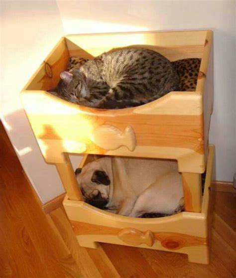 Bunk Beds For Cats Pug N Bunk Bed Animals Pinterest