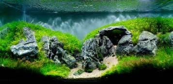 Aquascaping Rocks by The Top 10 Most Beautiful Freshwater Aquascapes Of 2012