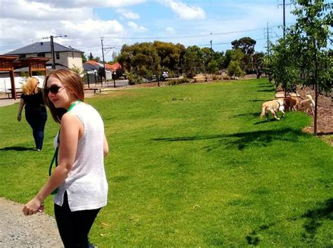 puppy parks near me top free things to do in adelaide june 2016 adelaide