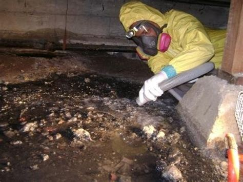 crawl space cleaning san francisco 52 best 24 7 water damage restoration san francisco 415