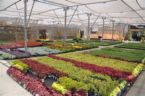 Garden Center Nursery The Best Nurseries And Garden Centers In