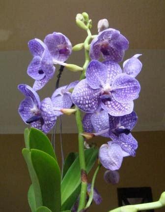 Pupuk Growmore Hijau nc s orchids antara hobi dan berbagi