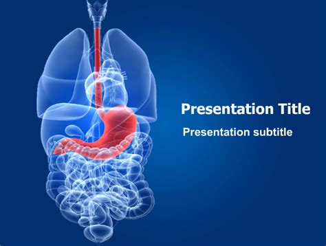 Human Stomach Powerpoint Template This Stunning Human Digestive System Ppt